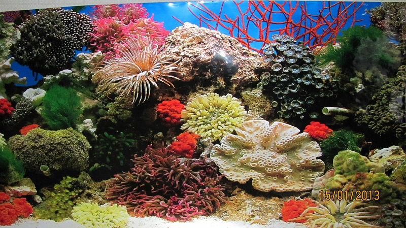 Картинки для аквариума фон